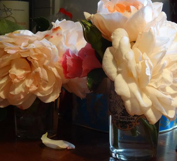 beautyblog-faldne-roser2