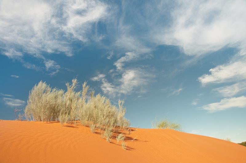 kalahari-dune 2
